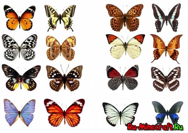 [1.5.1]Butterfly mania - бабочки