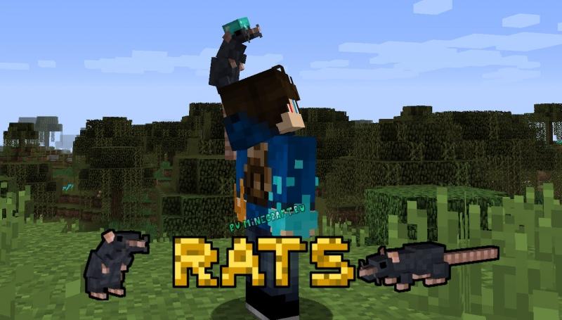 Rats - питомец крыса [1.16.4] [1.15.2] [1.14.4] [1.12.2]