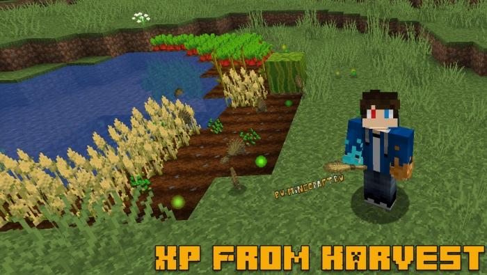 XP From Harvest - опыт за выращивание растений, фермерство [1.16.3] [1.15.2] [1.14.4] [1.12.2]