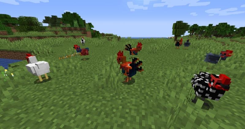 Better chickens - текстуры реалистичных куриц [1.16.4] [1.15.2] [1.12.2] [1.8.9] [16x]