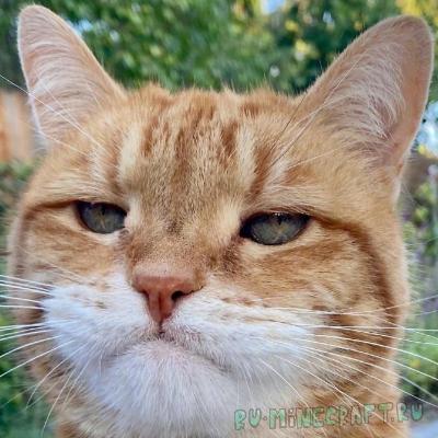 Cat Jammies - коты двигаются под музыку [1.16.5]
