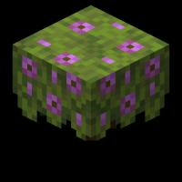 блок цветущей азалии