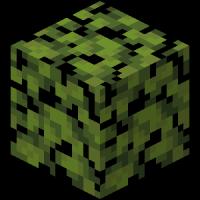 блок листвы азалии